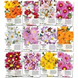 Cosmos Wildflower Seed Packet Collection (12 Individual Packets) Open Pollinated Seeds by Seed Needs