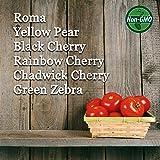 6 Varieties Non-GMO Heirloom Organic Cherry