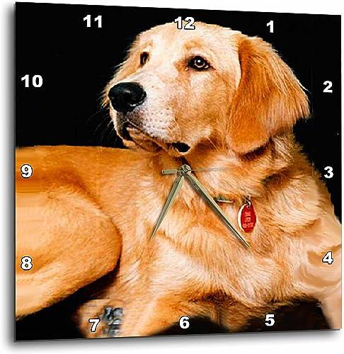 3dRose Dogs Golden Retriever – Golden Retriever – 15×15 Wall Clock DPP_254_3