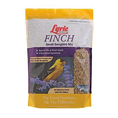 Lyric 2647469 Finch Small Songbird Wild Bird Mix