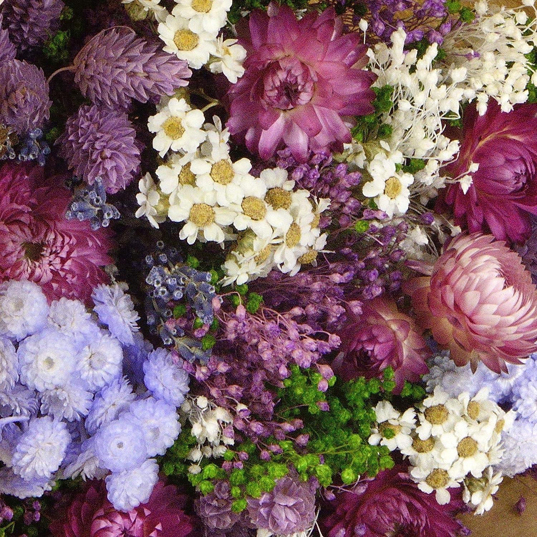 Sanremo flores secas de la Riviera dei Fiori Italia Violeta Ramo Fantasy