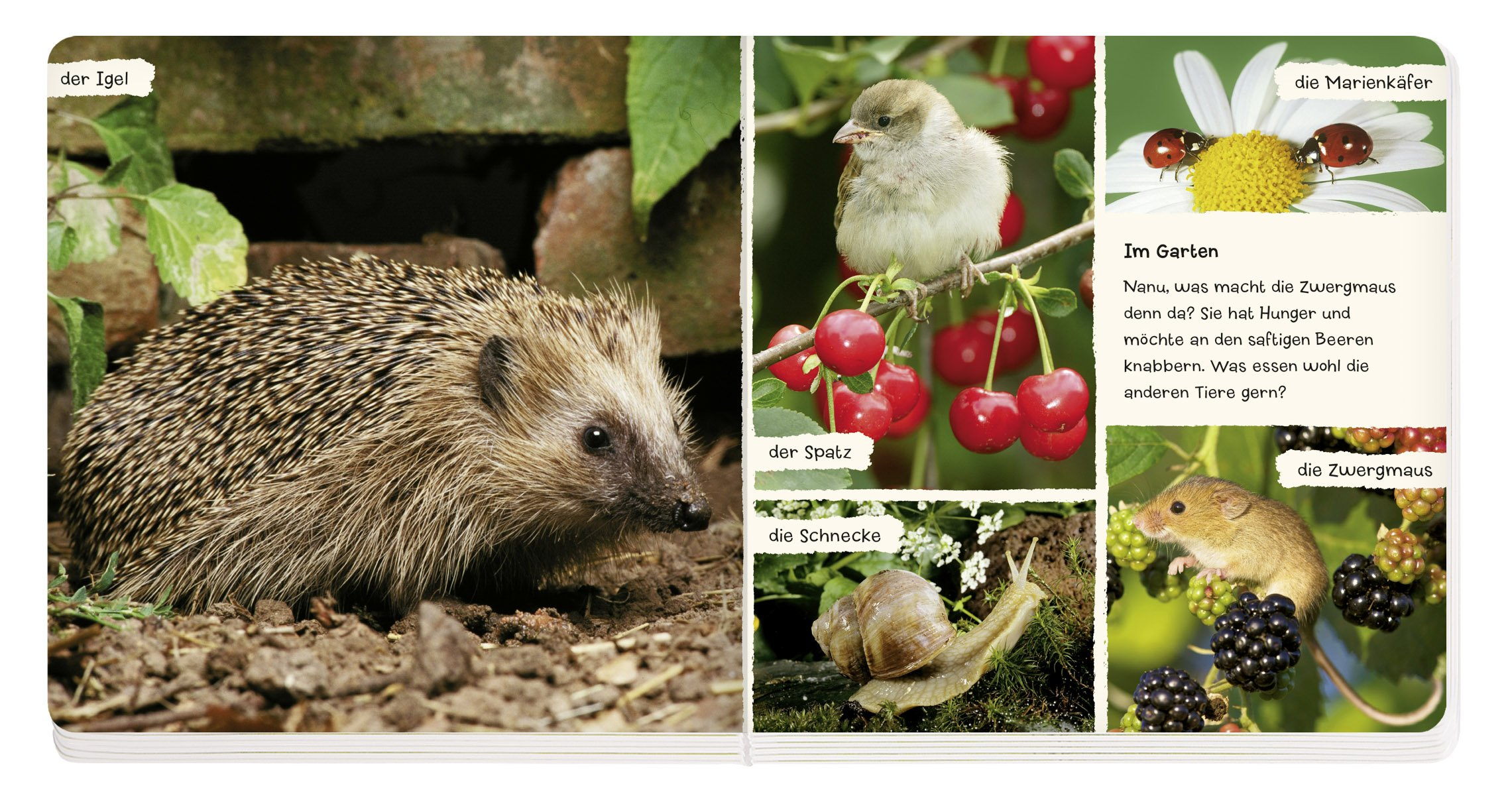 Mein liebstes Tierbuch (Bücher für die Kleinsten) Pappbilderbuch – 1. Dezember 2011 Coppenrath 3649603454 Ab 24 Monaten Babybücher