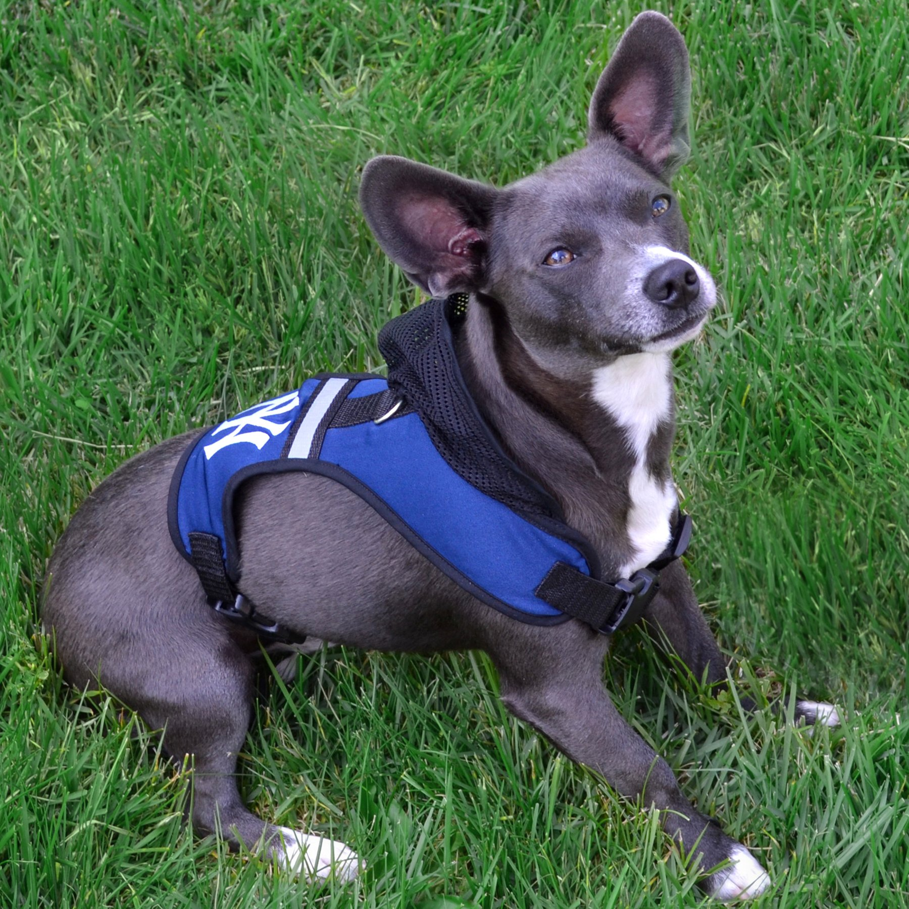 Pets First Jacksonville Jaguars Harness, Medium by Pets First (Image #3)