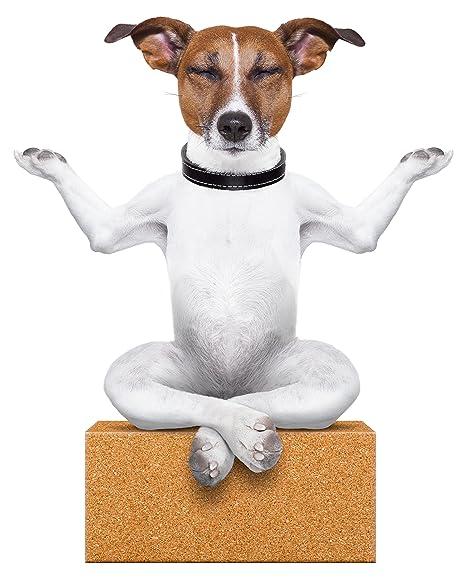 Amazon.com: Cute Meditating Yogi Puppy Dog on Yoga Block ...