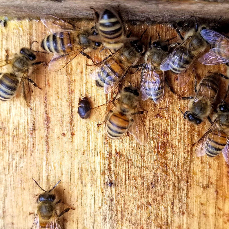 5pcs Black Small Bee Hive Beetle Blaster BeeHive Beetle Trap Beekeeping  RHC
