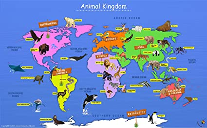 Amazon.com : Animal Kingdom Map - Laminated (54