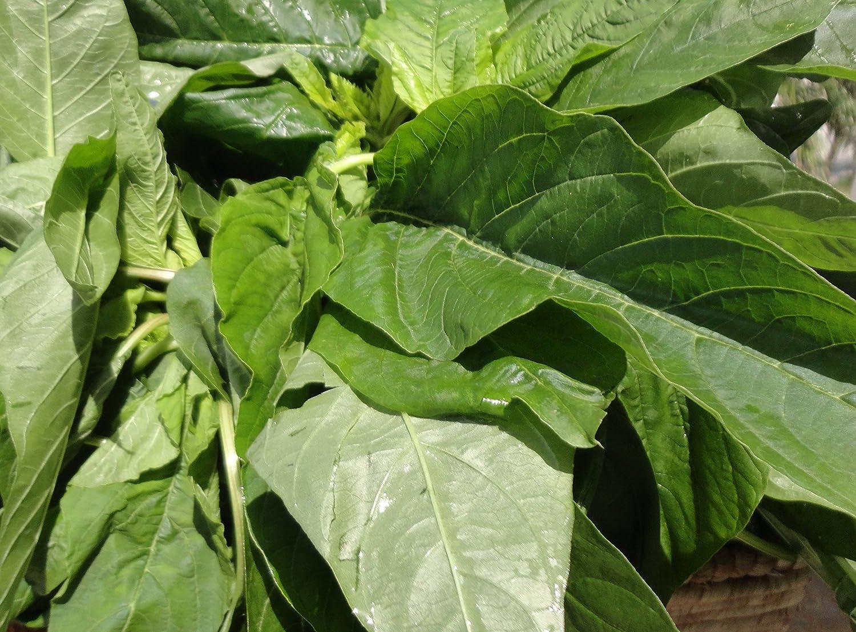 1000 seeds Spinach Handsome woodlands Vegetable Heirloom Seeds