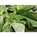 Green Callaloo,Jamaican Callaloo Seeds, (Amaranth- Chinese Spinach) (1000, Seeds)