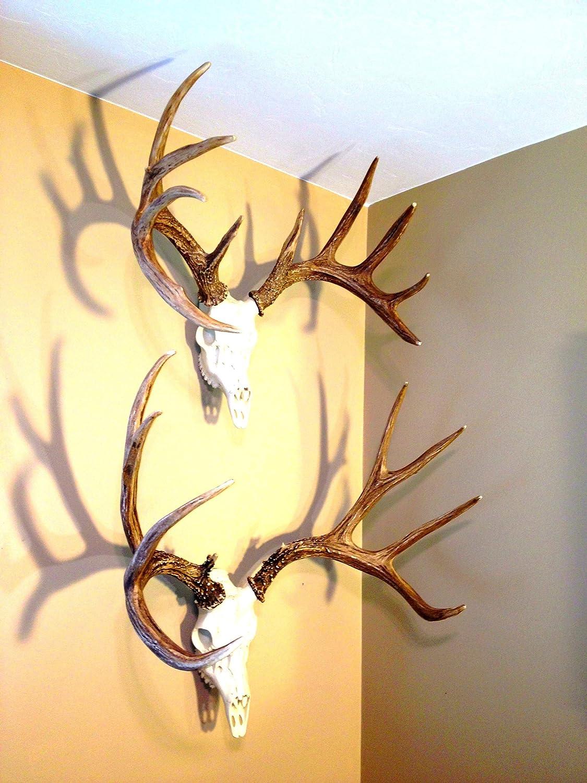 Amazon.com: Faux European Whitetail Deer Antlers by Muskoka ...