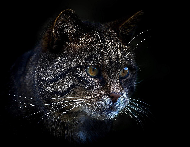 Dimensioni: 150 x 130 cm. COUNTRY MATTERS con Retro in Pile e Immagine di Un Bel Gatto Tabby Un Grande Regalo per Ogni Amante dei Gatti Coperta Morbida al Tatto