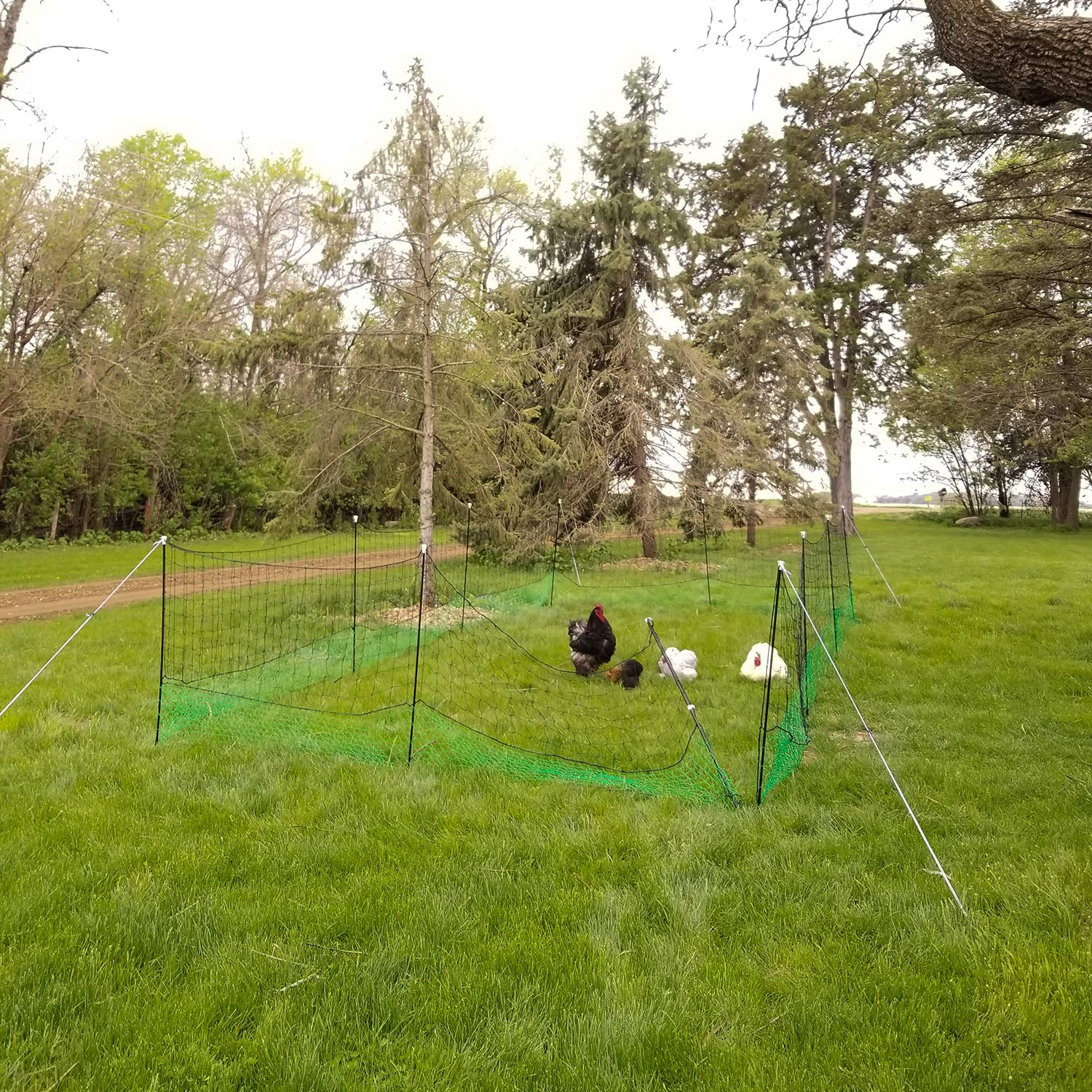 Rural365 Poultry Fencing Chicken Fence Netting 69 by 4 Foot Poultry Netting Chicken Fencing Chicken Mesh Poultry Net
