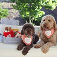 The Dapper Dog Box - Curated Fun Themed Dog Toys, Treats and Accessories Subscription: Small-Medium Dog (0-35