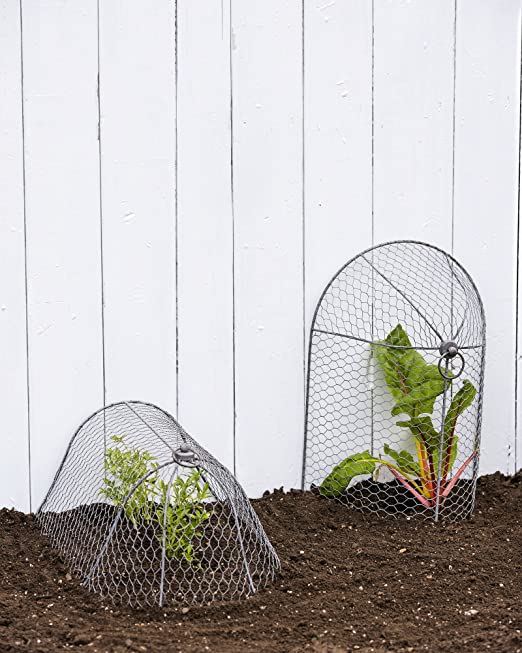 Amazon.com : 3-in-1 Chicken Wire Cloche : Garden & Outdoor