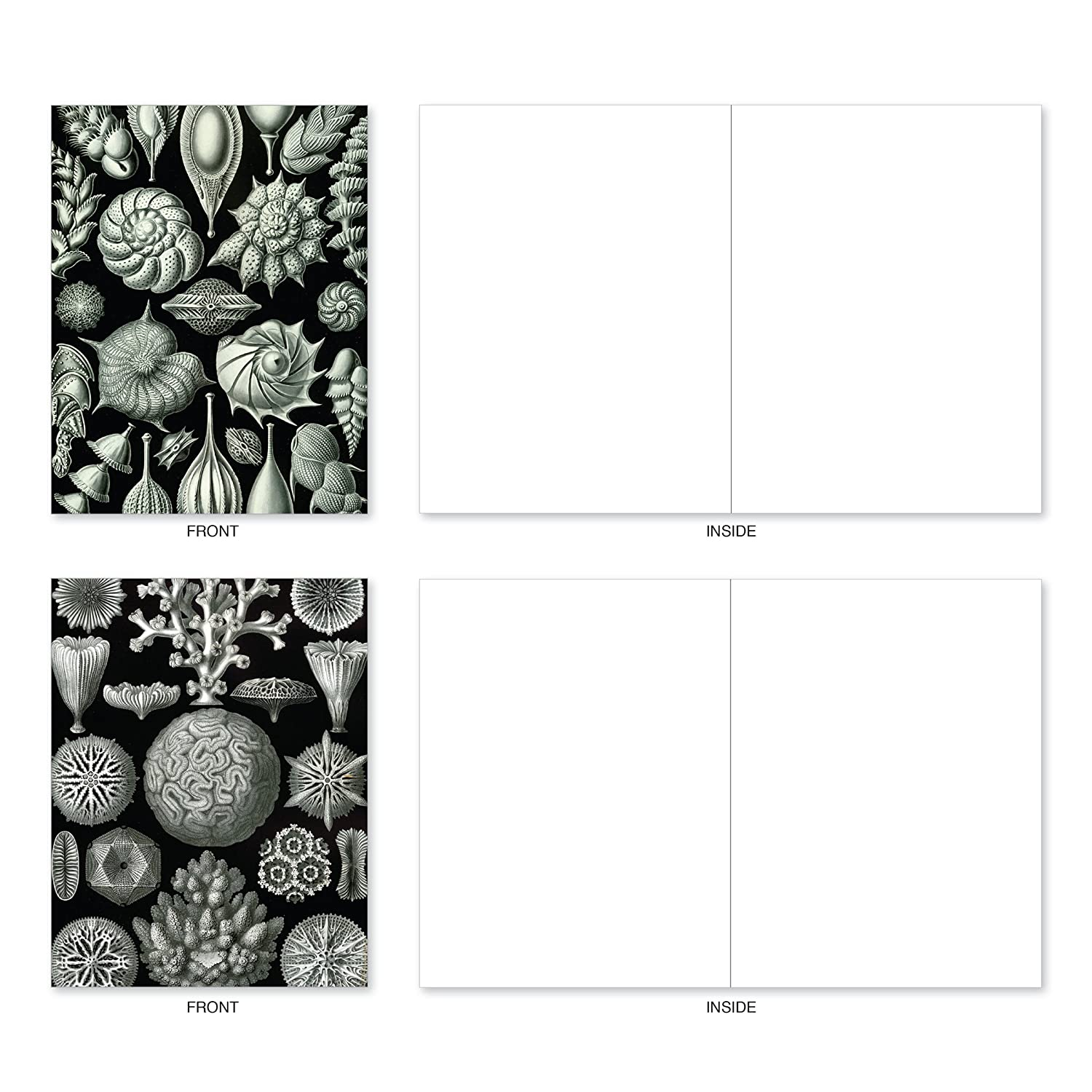 10 Whitewoods Greeting Cards With Envelopes Set Of Assorted Black