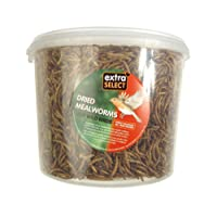 Extra Select Mealworms Tub 5ltr