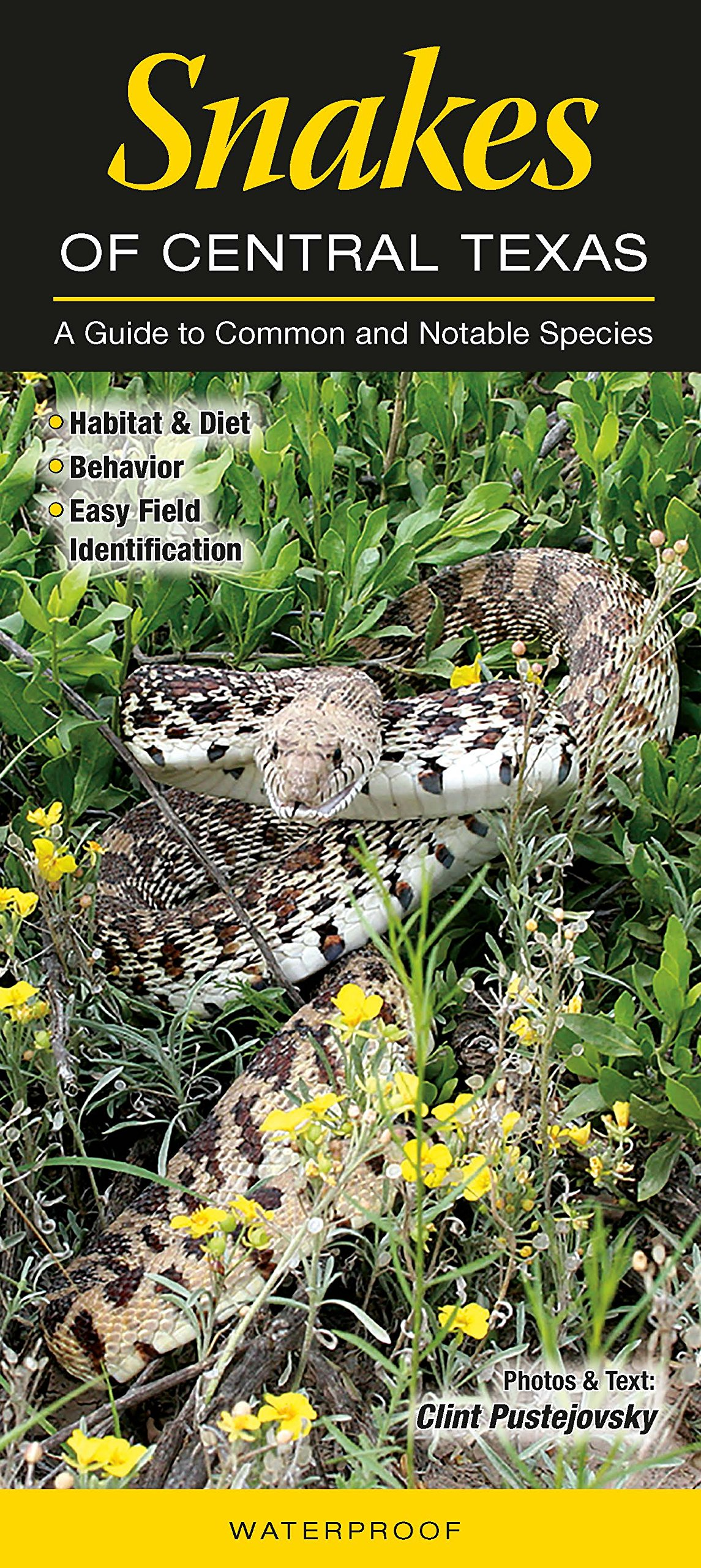 Download Snakes of Central Texas: A Guide to Common & Notable Species (Quick Reference Guides) ebook