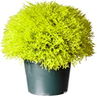 National Tree 15 Inch Golden Juniper Artificial Bush in Green Pot (LCBG4-700-15-1)