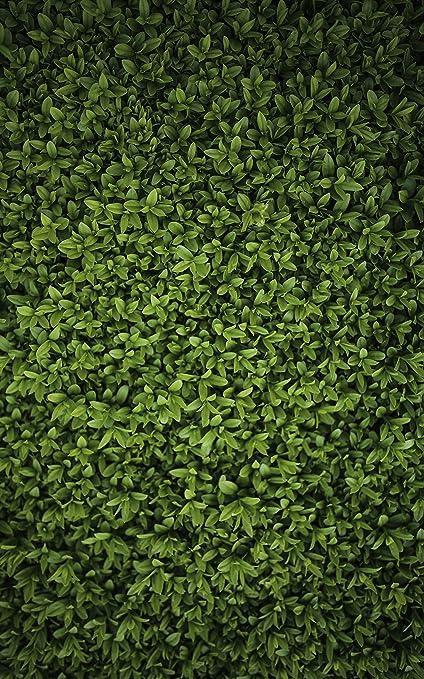 amazon com dark grass wall backdrop lawn grass ground green bush