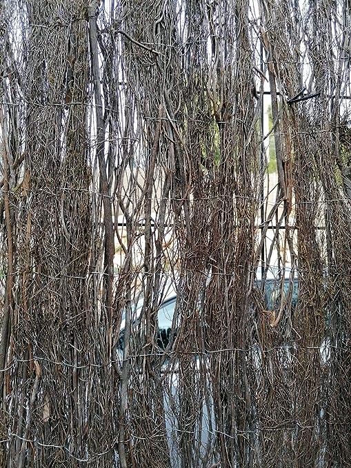MALLA BREZO ocultación MUY ALTA 2,5-3 kg/m2 para jardín. (1 x 3 m): Amazon.es: Bricolaje y herramientas
