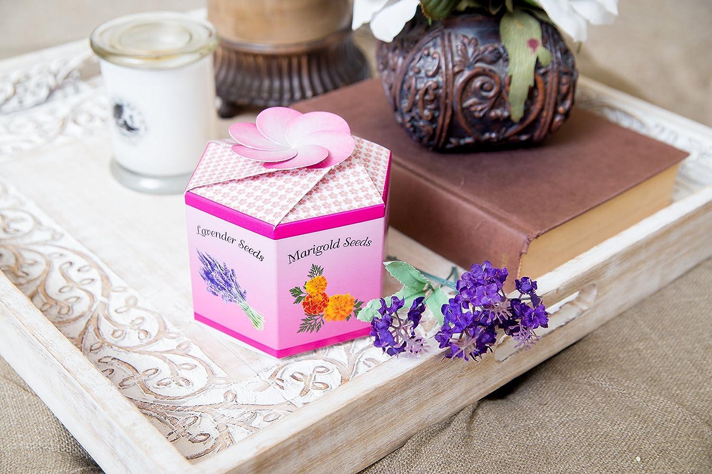 Amazon.com : Flower Garden Kit - Seed Starter Pack of Marigold ...