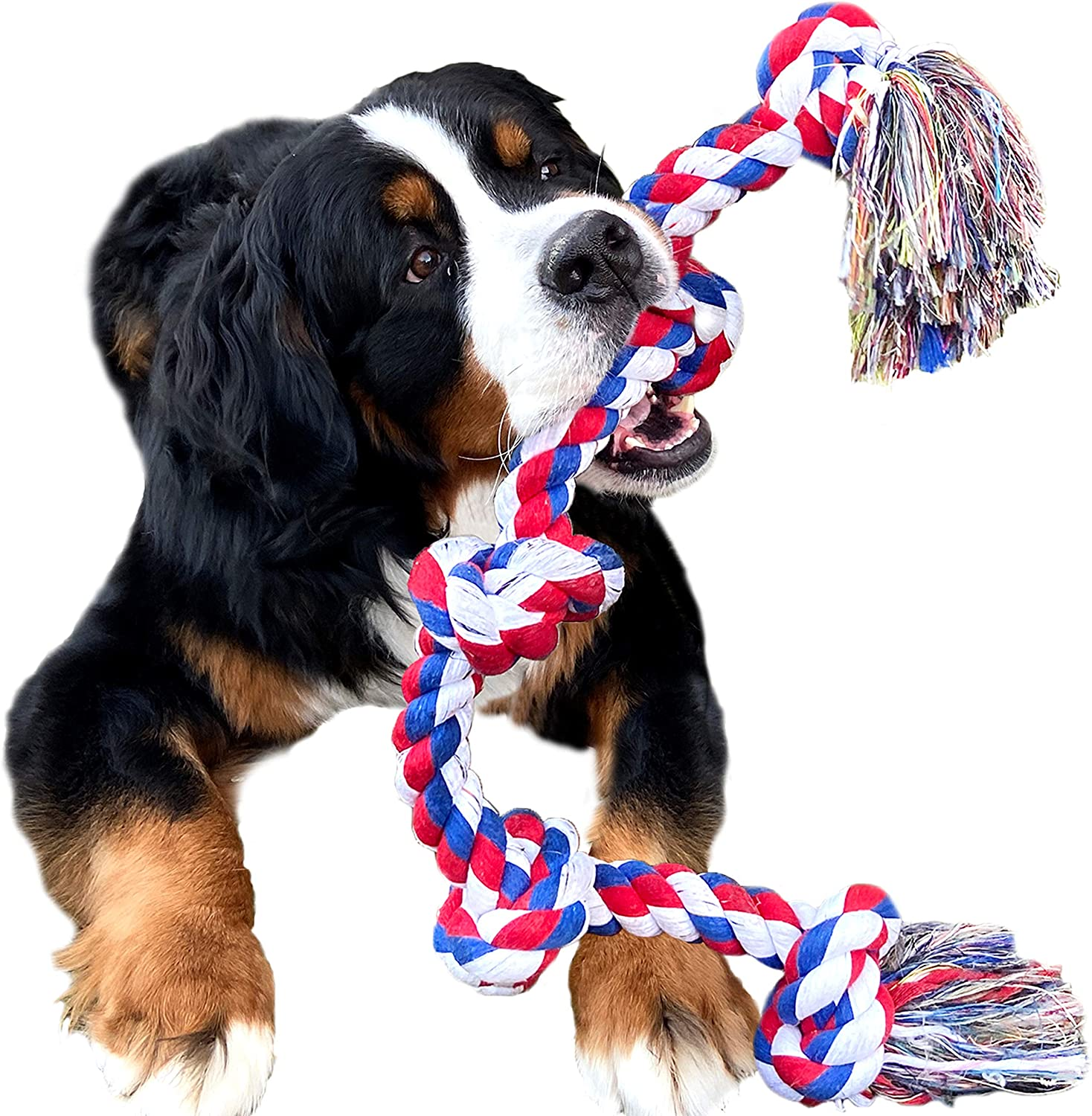Best dog chew toys for aggressive chewers 8