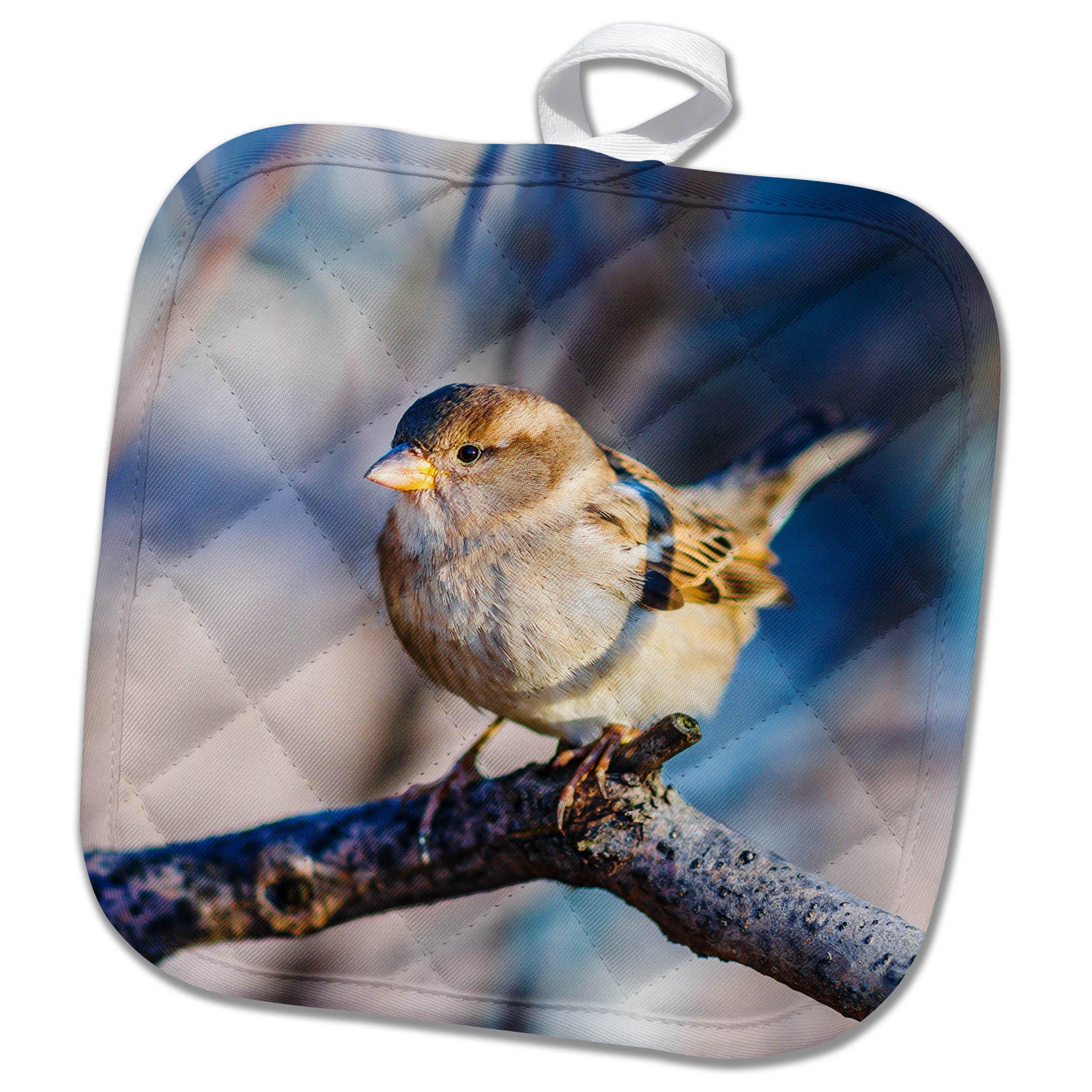 3dRose Alexis Photography - Birds - Brave sunlit sparrow in a tree twig - 8x8 Potholder (phl_270254_1)