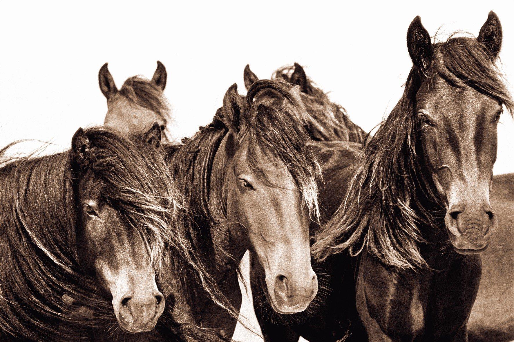 The Wild Horses of Sable Island Roberto Dutesco