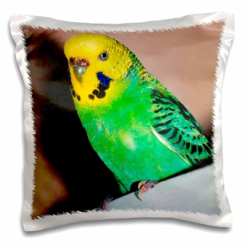 3dRose Birds - Budgie Parakeet - 16x16 inch Pillow Case (pc_929_1)