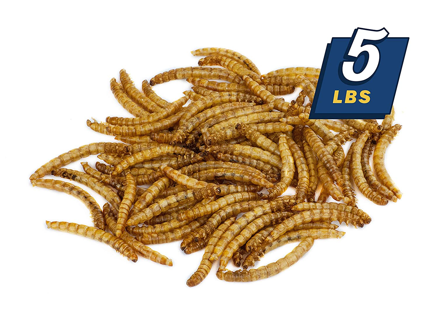 MBTP Bulk Dried Mealworms Treats for Chickens /& Wild Birds 5 Lbs