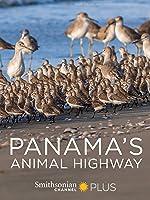Panama's Animal Highway