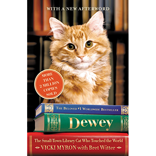 The Small-Town Library Cat Who Touched The World Dewey