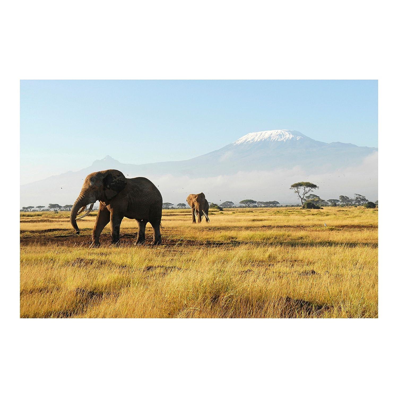 Vliestapete – Elefanten vor dem Kilimanjaro in Kenia – Wandbild breit