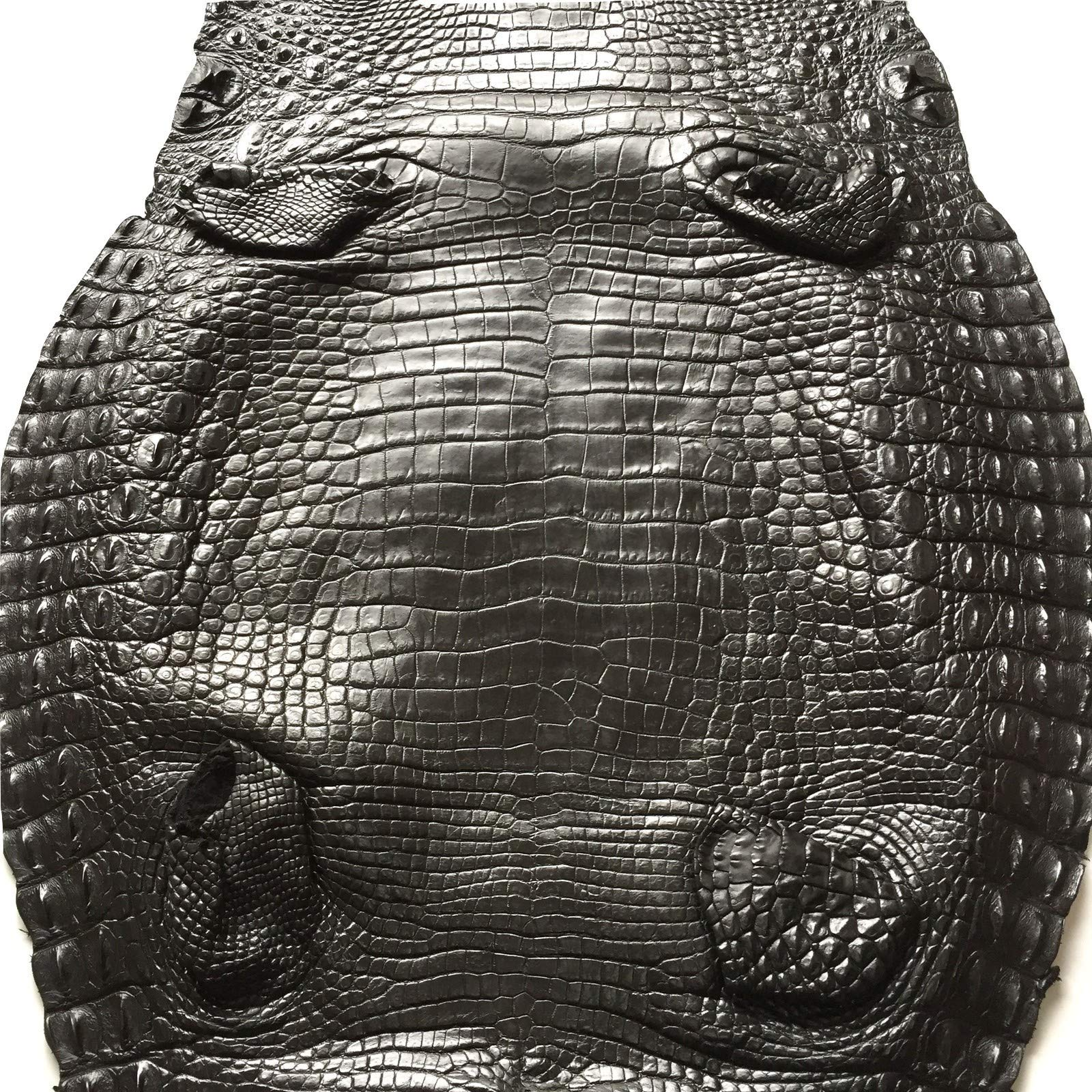 Crocodile Skin Leather Hide Belly 40cm