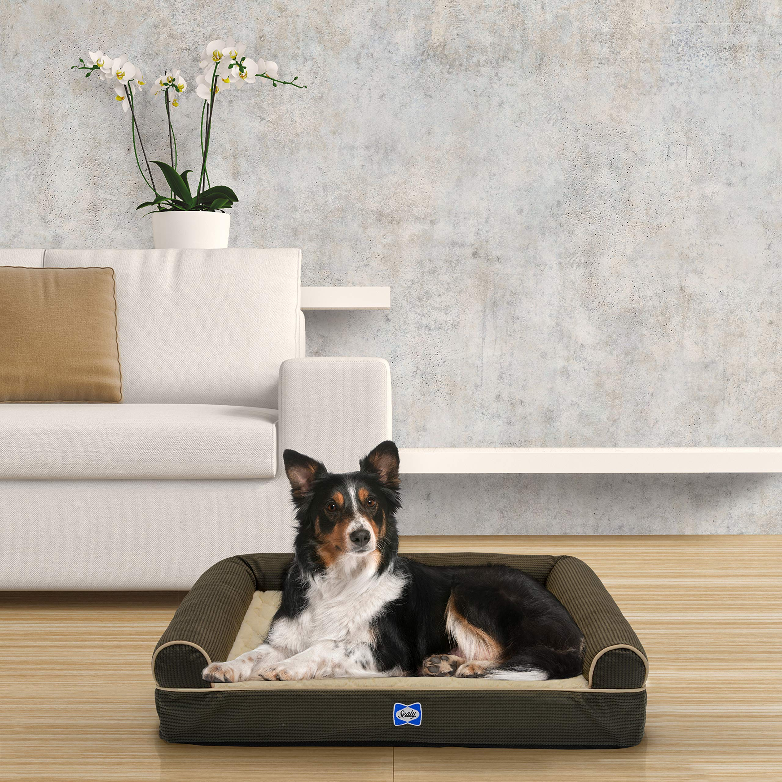 Sealy Ultra Plush Sofa-Style Bolster Dog Bed Brown, Medium - Orthopedic Foam pet Bed with Machine Washable Plush Cover by Sealy