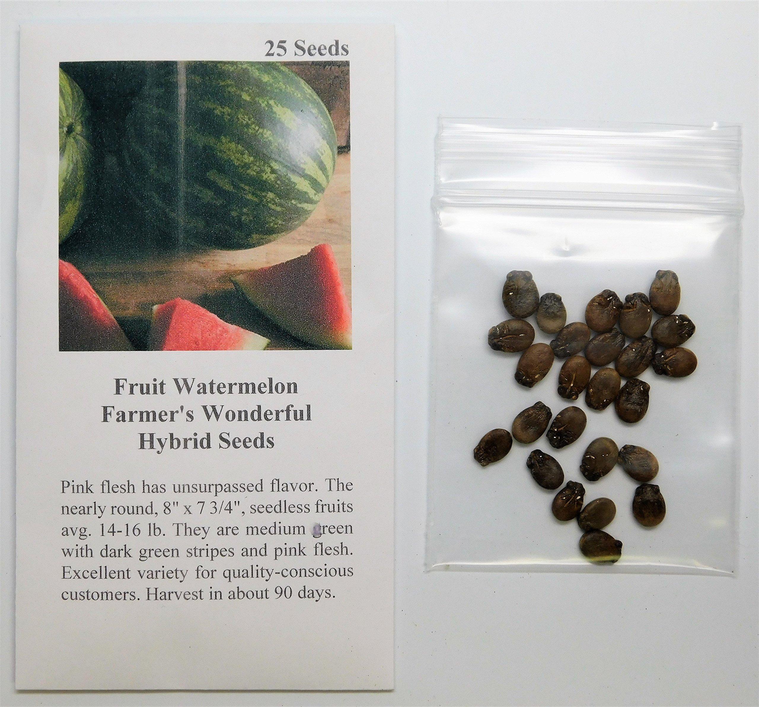 David's Garden Seeds Fruit Watermelon Farmer's Wonderful (Seedless) TO9365 (Red) 25 Non-GMO, Hybrid Seeds