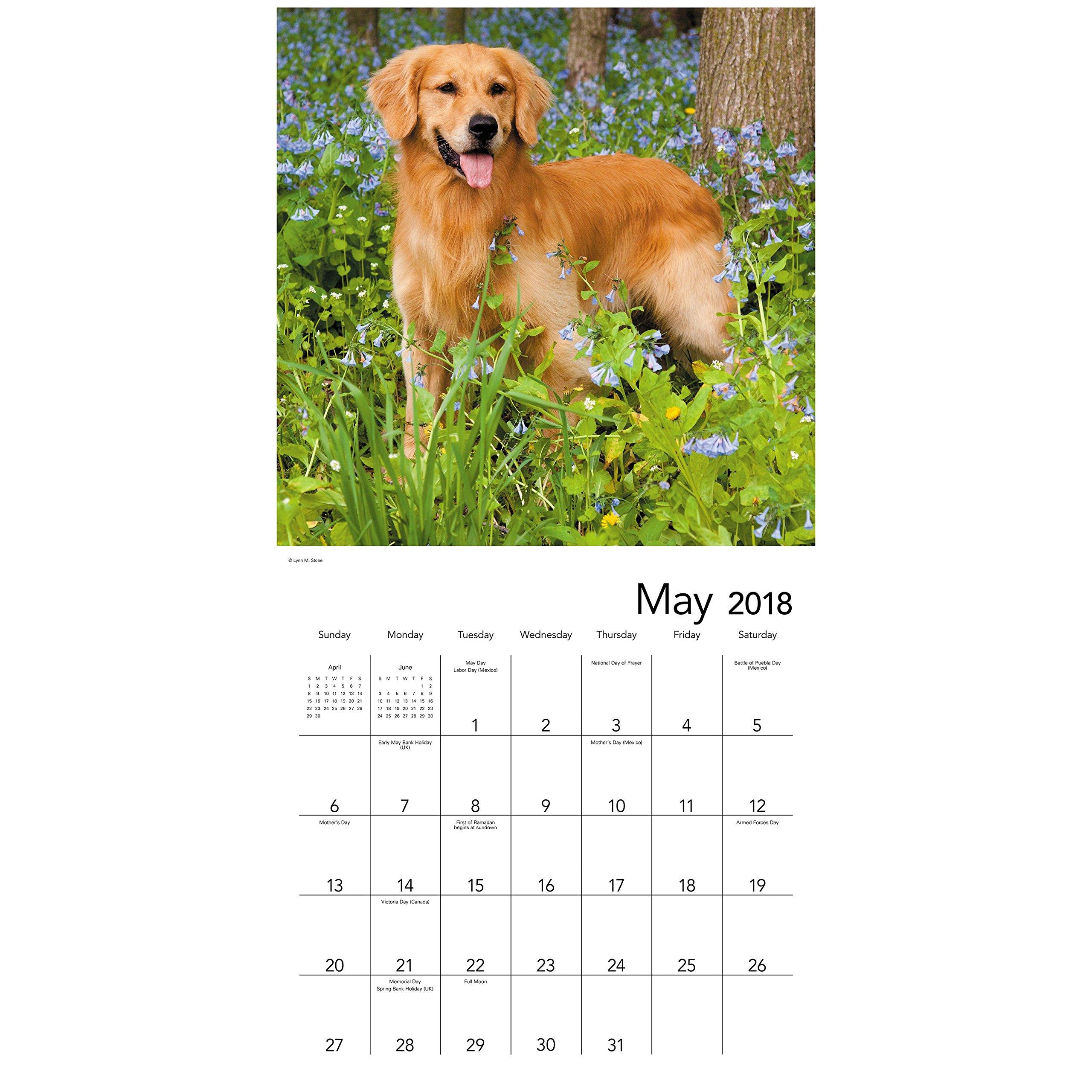 2018 golden retrievers wall calendar mead mead 0038576721883 2018 golden retrievers wall calendar mead mead 0038576721883 amazon books nvjuhfo Choice Image