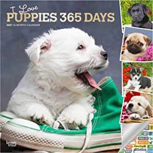 I Love Puppies Calendar 2021 Bundle - Deluxe 2021 Puppies Wall Calendar with Over 100 Calendar Stickers (Puppy Gifts, Office Supplies)