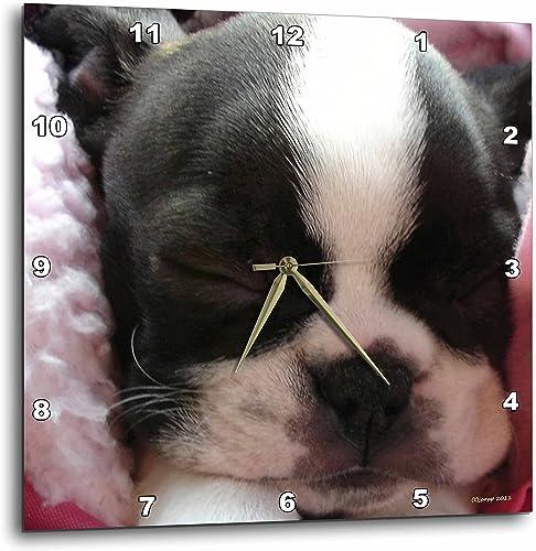 3dRose Boston Terrier Puppy – Wall Clock, 13 by 13-Inch DPP_22237_2
