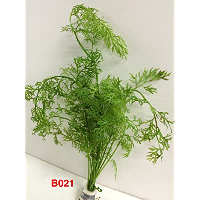 Exotic Live Aquatic Plant for Fresh Water Ceratopteris thalictroides Bundle B021 By Jayco BUY 2 GET 1 FREE : Garden & Outdoor