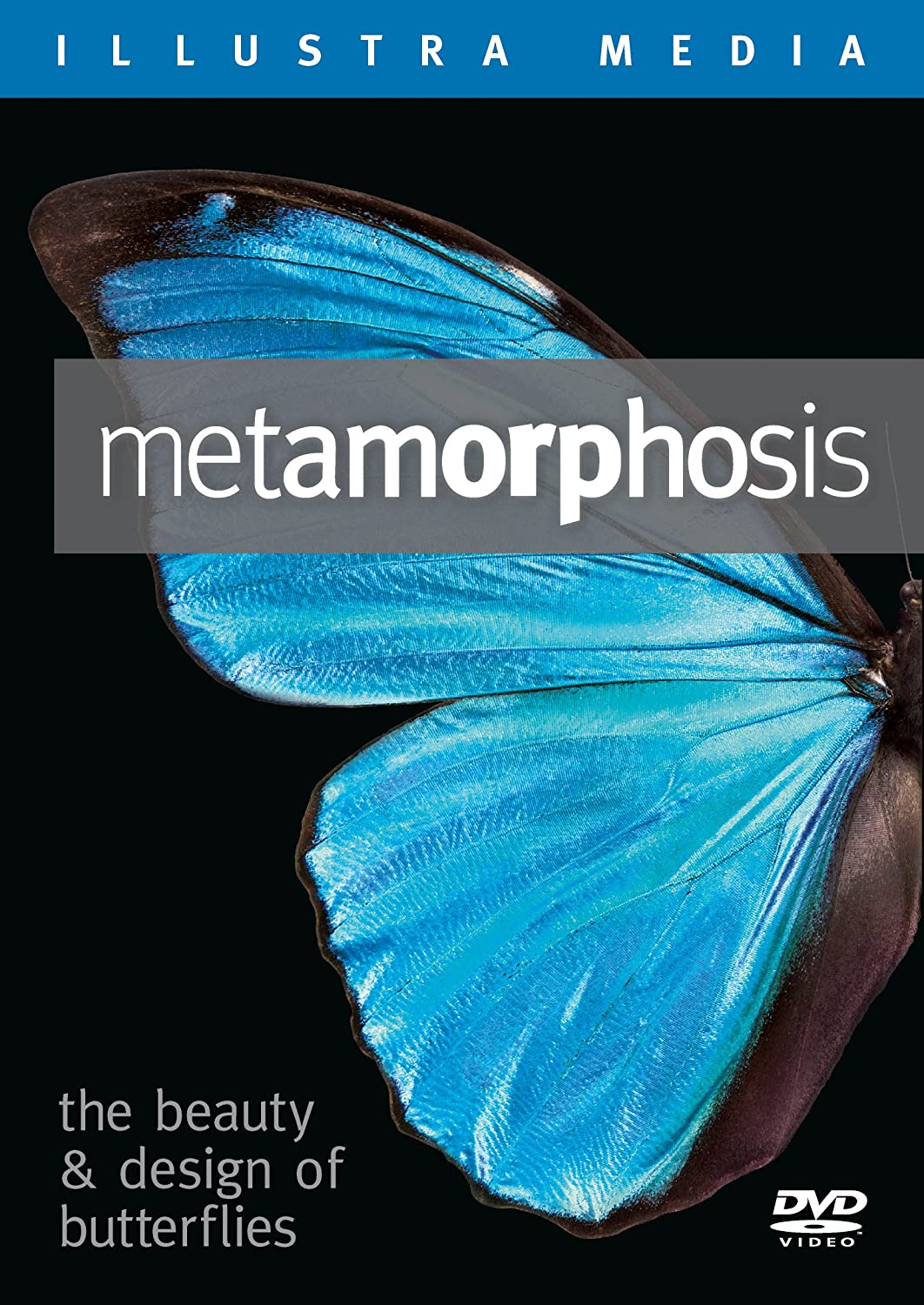 com metamorphosis the beauty and design of butterflies  com metamorphosis the beauty and design of butterflies alvin chea paul nelson thomas emmel lad allen movies tv