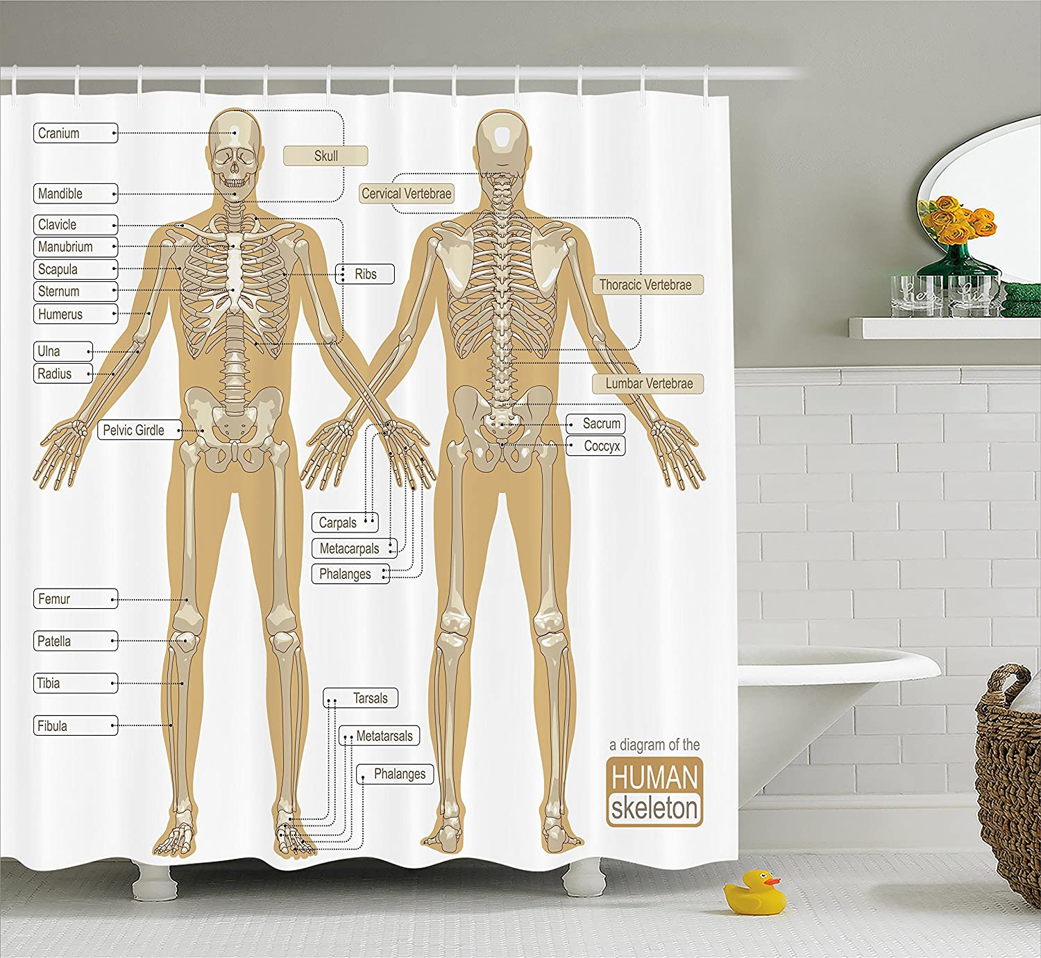 Amazon Ambesonne Human Anatomy Shower Curtain Diagram Of Human
