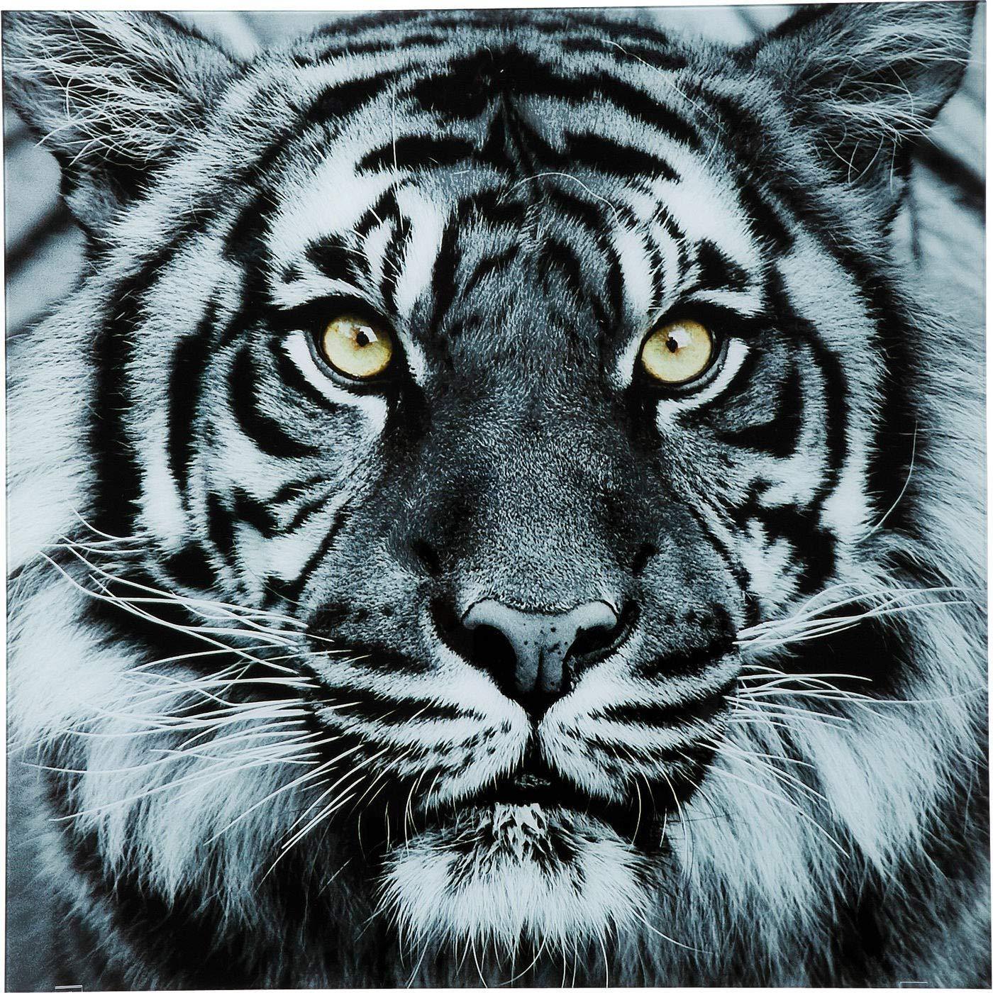 Pizarra cristal Face tigre 80/x 80/cm Kare Design