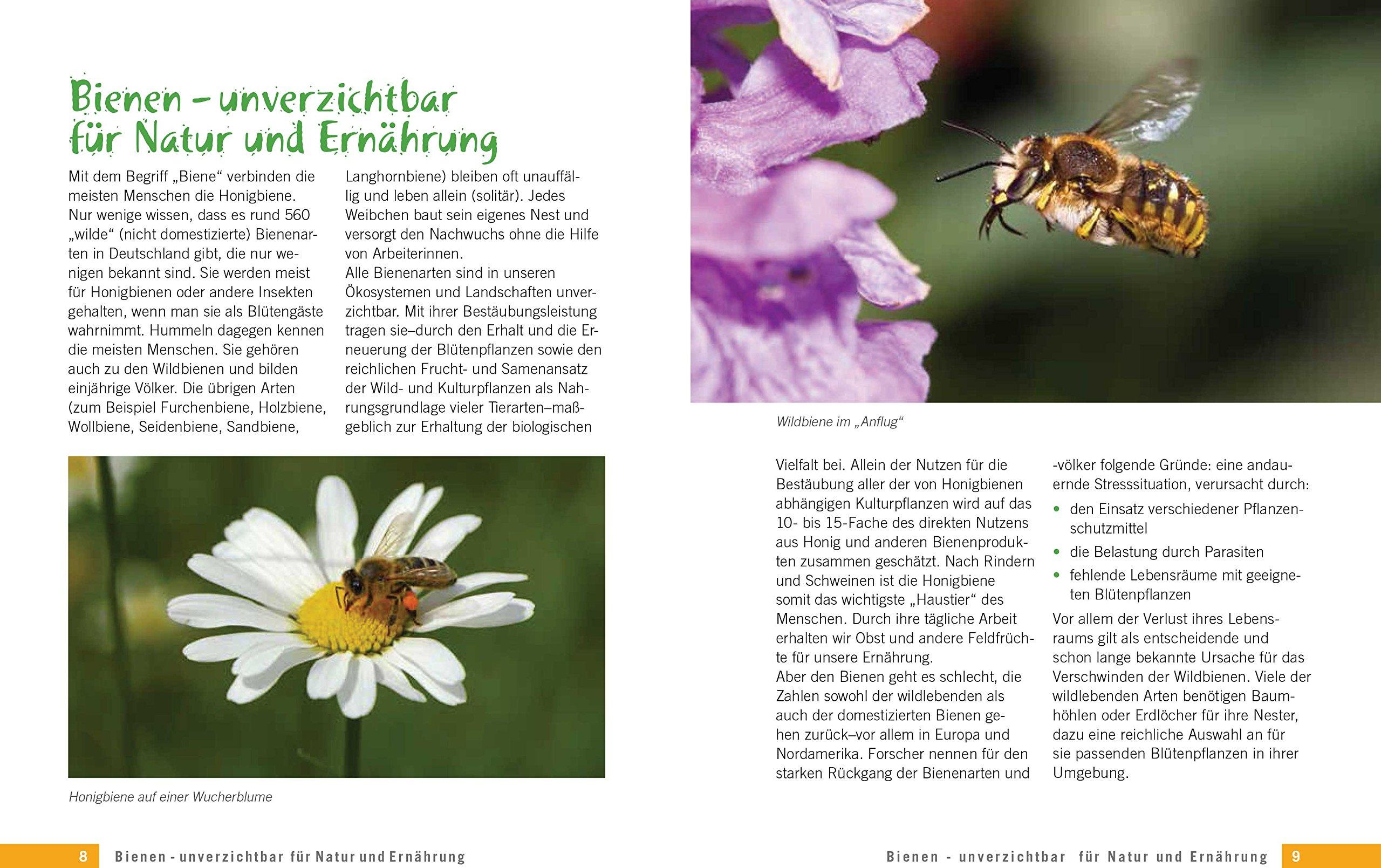 Die Schönsten Pflanzen Für Bienen Und Hummeln 9783809435907 Amazon