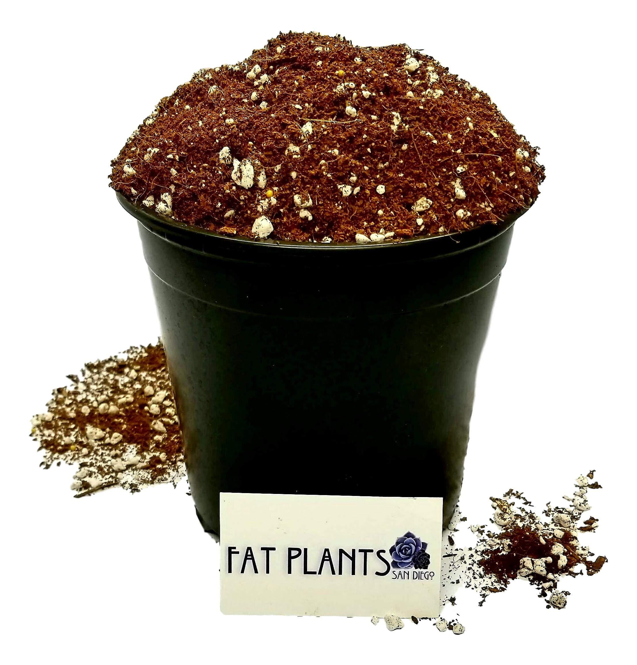 Fat Plants San Diego Succulent Soil Gallon