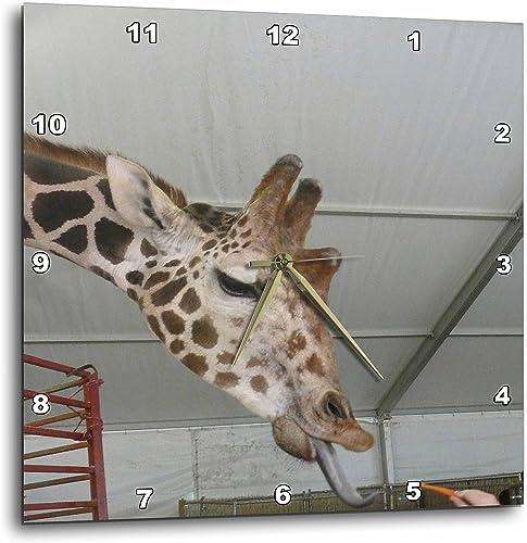 3dRose DPP_13928_1 Wall Clock, Carrot for Giraffe, 10 by 10-Inch