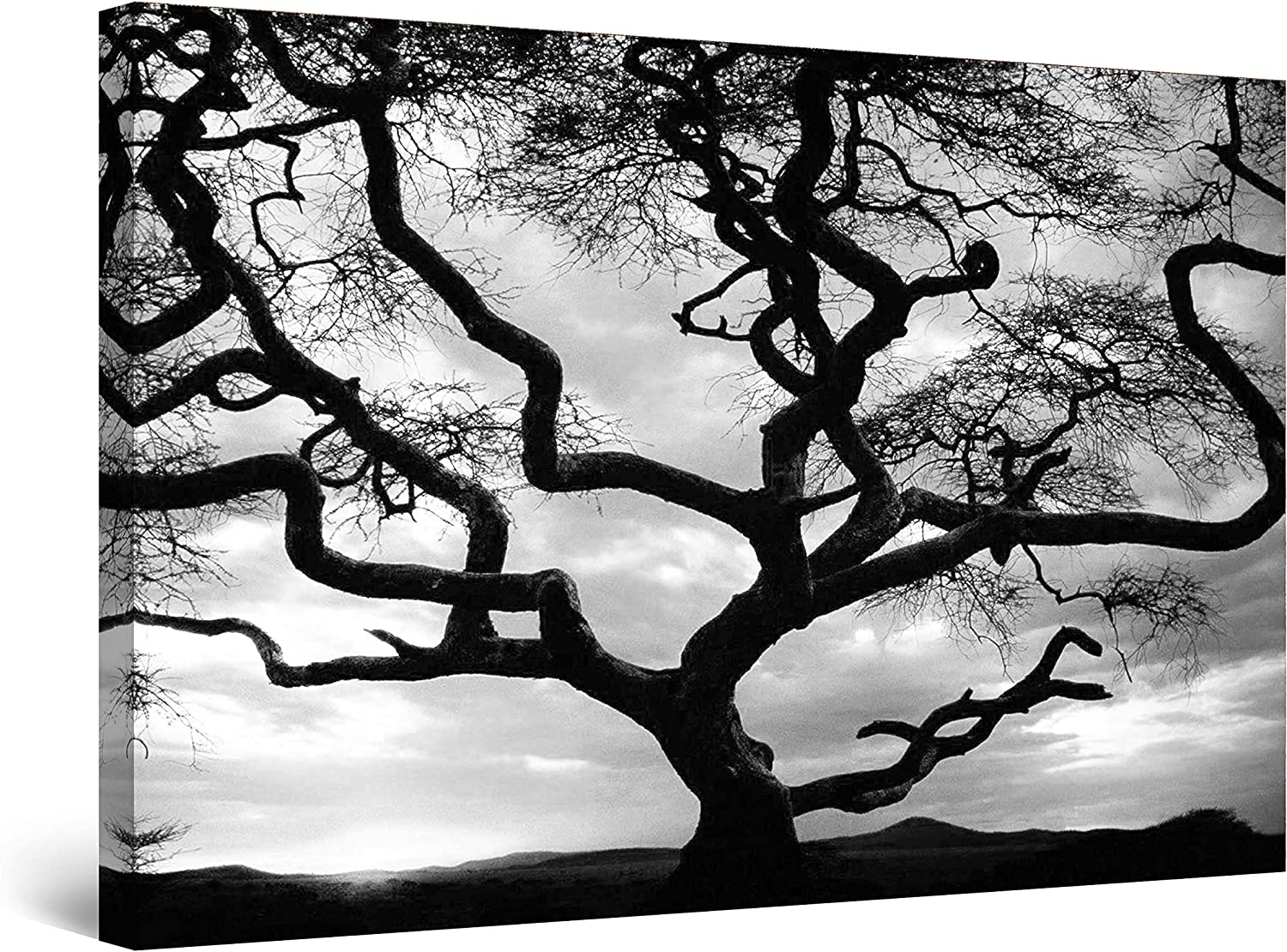 Love Couple Tree Branch Nature 5 piece HD Poster Wall Home Decor Canvas Print