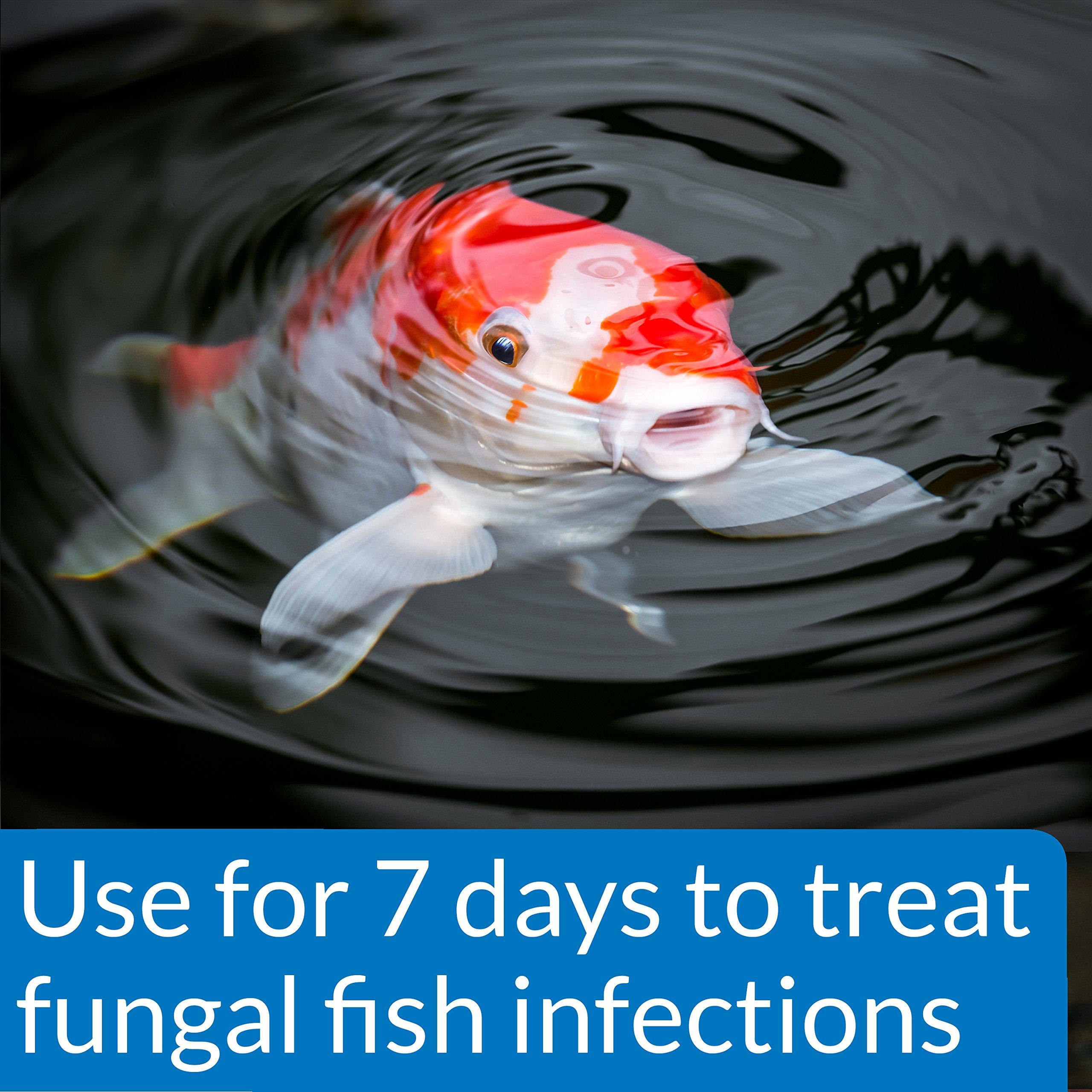 API POND PIMAFIX Antifungal Pond Fish Infection Remedy 64-Ounce Bottle by API (Image #2)