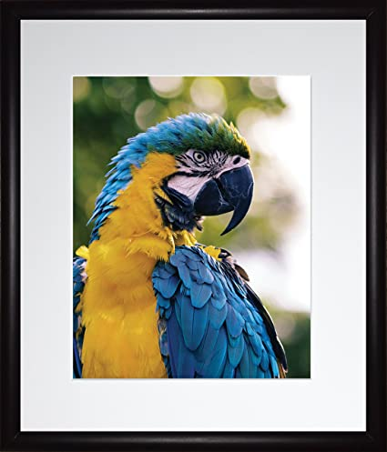 Baby Blue Macaw Parrot