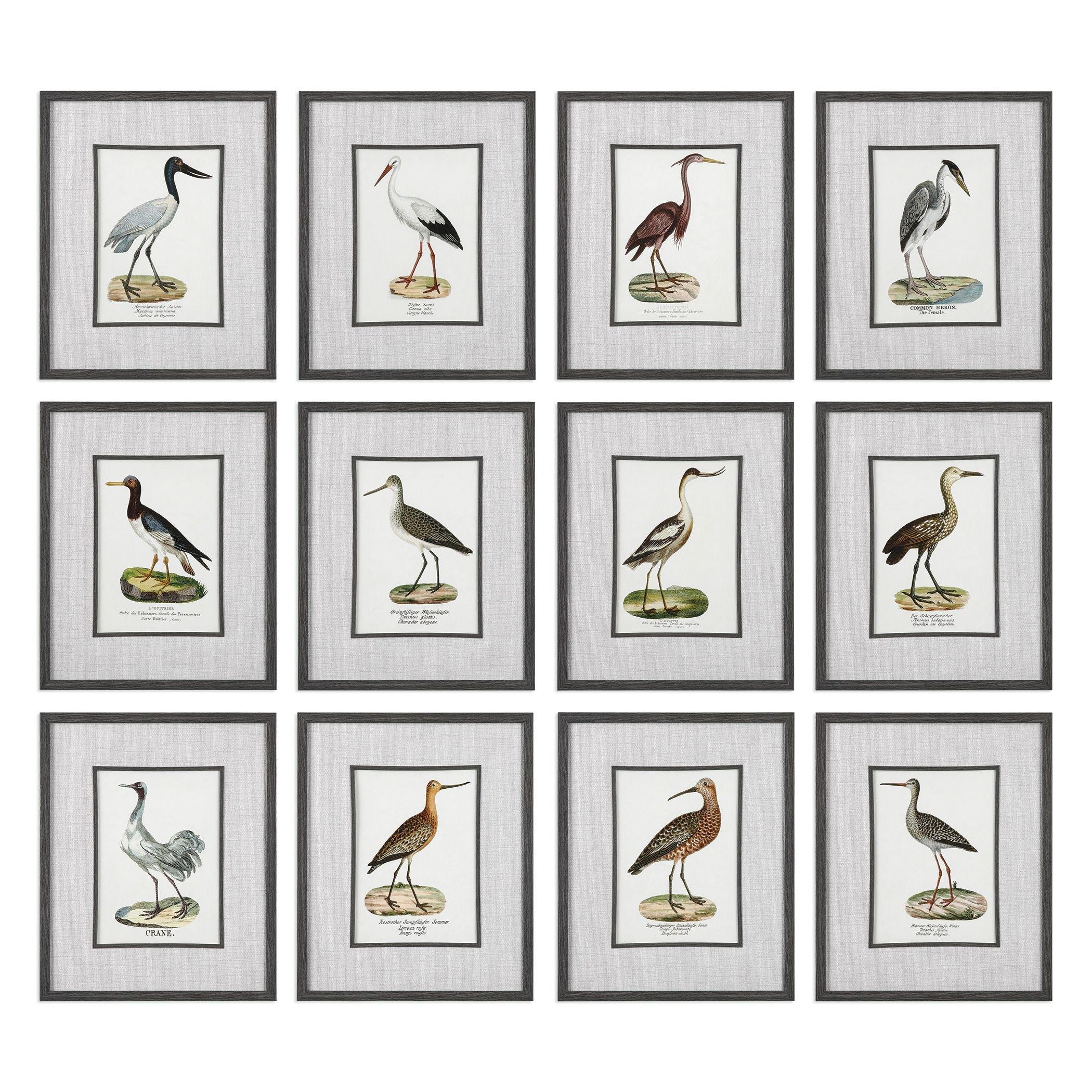 Set of 12 Elegant Water Bird Prints | Sea Shore Wall Art Coastal Beach