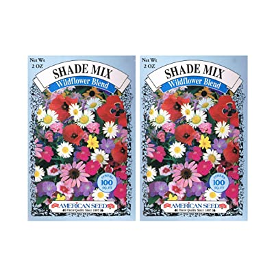 2015 Seeds - American Seed's Shade MIX Wildflower Blend - 100 Squ.ft.per Box - 2 Box Pack! : Garden & Outdoor